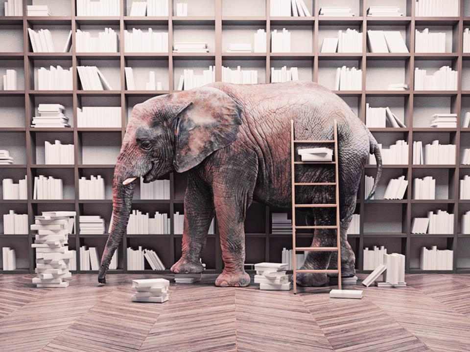 فیل در کتابخانه | روایت یک کتابدار